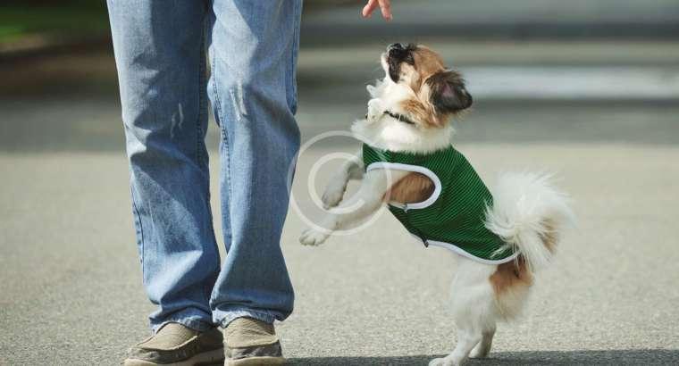 Dog Walking Helps Keep Your Dog Sane